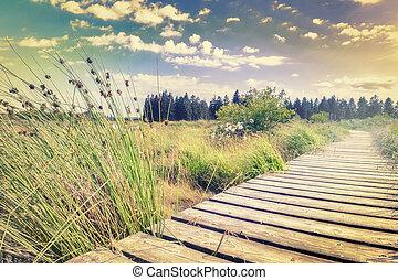 Summer landscape with wooden plank board walkway - Beautiful...