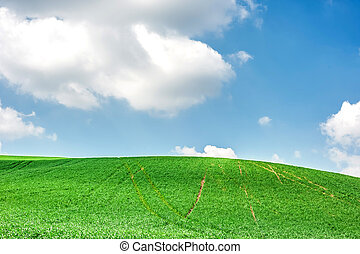 Spring green field and blue sky