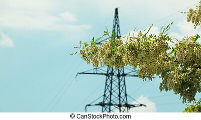 Branch Of Acacia Moved By Wind VS Electric Pylon