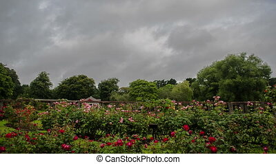 Belfast Botanic Gardens - A Time-Lapse Video of the flowers...