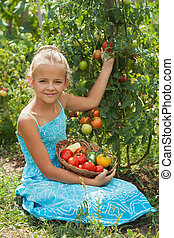 Young girl picking tomatoes in the summer garden