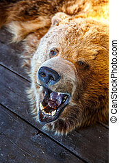 Mounted Bear with Open Mouth