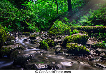 Forest stream running over mossy