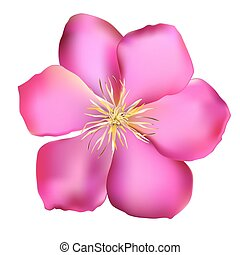 Pink Clematis Vector Illustration EPS10