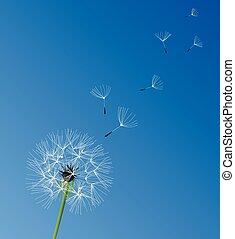 dandelion white - dandelion flower