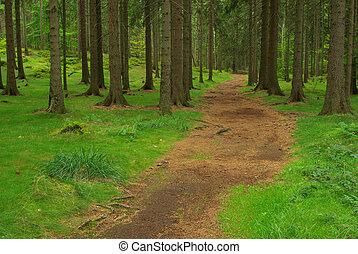 44, foresta