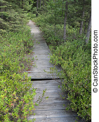 Boggy Boardwalk - A boardwalk for hikers runs over a bog and...