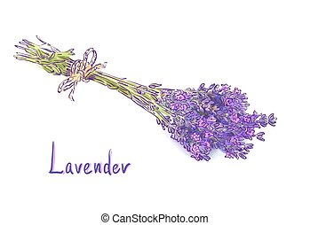 Lavender bunch with a jute rope. Isolated on white...