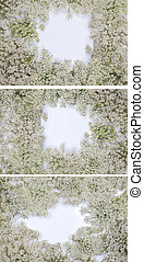 Wild carrot flower on white background - Original size Full...
