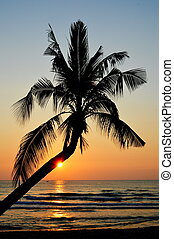 coconut tree on sunset at the beach