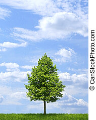 Green lone tree on blue sky background