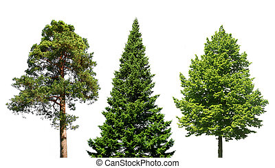 Three trees on white - Three different trees isolated on...
