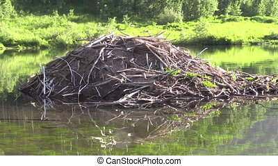 Beaver House on Lake - a zoom out of a beaver house on a...
