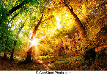 Magic Forest - Magical forest scenery with a mix of summer...