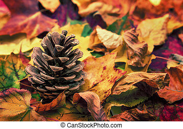 Fir cone on colorful autumn leaves