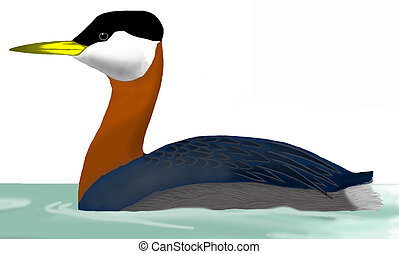 Red-necked Grebe - Podiceps grisegena