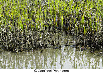 Edge Of Cordgrass And Mud In Brackish Water - The edge of a...