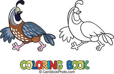 Coloring book of little quail - Coloring book or coloring...