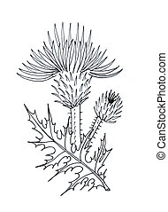 Thistle graphic simple black and white drawing sketch