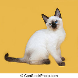 Thai white kitten sitting on yellow