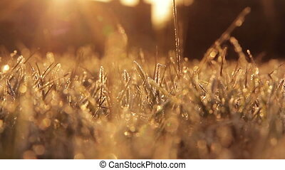 Frosty Grass in the morning sunshine