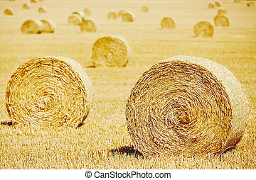 Straw bales on the field after harvest.