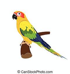 parrot, vector illustration