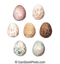 Set of seven watercolors eggs