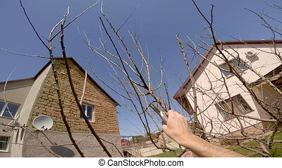 Man Cutting Tree With Secateurs - The shot from head point...