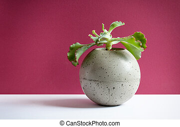 Plant in a sphere pot