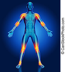 3D male medical figure with joints highlighted - 3D render...
