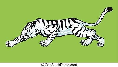 white tiger - vector illustration of white tiger