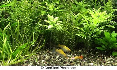 Feeding time in planted aquarium - Aquarium habitants...