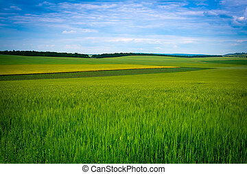 Green grassland and blue sky in summer