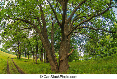 oak stands next to a road forest landscape green summer...