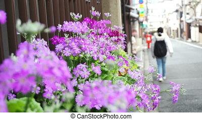walking along the street flower