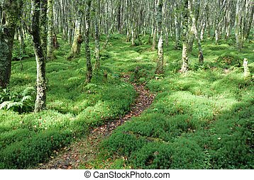 Path in green forrest - Zigzag foothpath in forrest with...