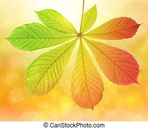 Autumn leaf of chestnut tree Aesculus hippocastanum