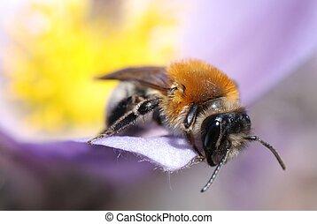 Macro shot of bee on spring flower