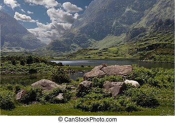 A Valley in County Kerry - A valley near the Gap of Dunloe...