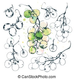 Ink Drawn Grapes - Ink drawn illustrations of sweet grape...
