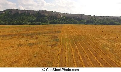 Golden Farm Field With Straw At Hilly Terrain - Aerial show...