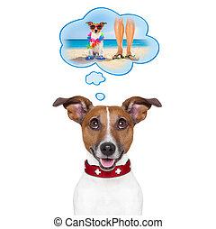 summer vacation dog - jack russell dog thinking about the...