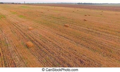 Harvested Field With Bales Of Straw