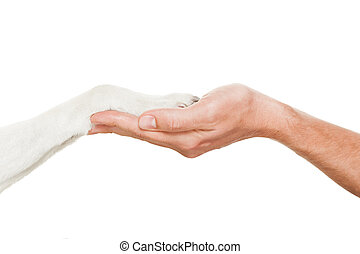 dog and owner handshaking or shaking hands in a perfect...