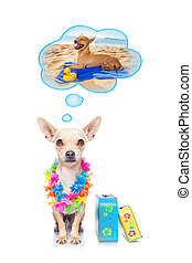 summer vacation dog - chihuahua dog thinking about the...