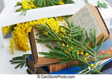 pile of old books - vintage old open book with mimosa...