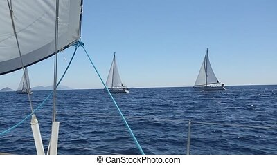 Sailboats participate in sailing