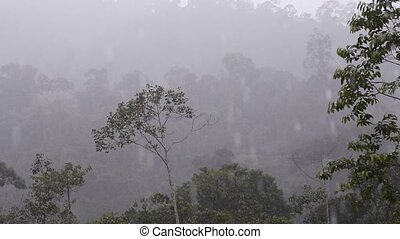Borneo misty Rainforest in early morning