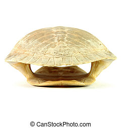 Turtle shell - whole shell of turtle isolated in white...
